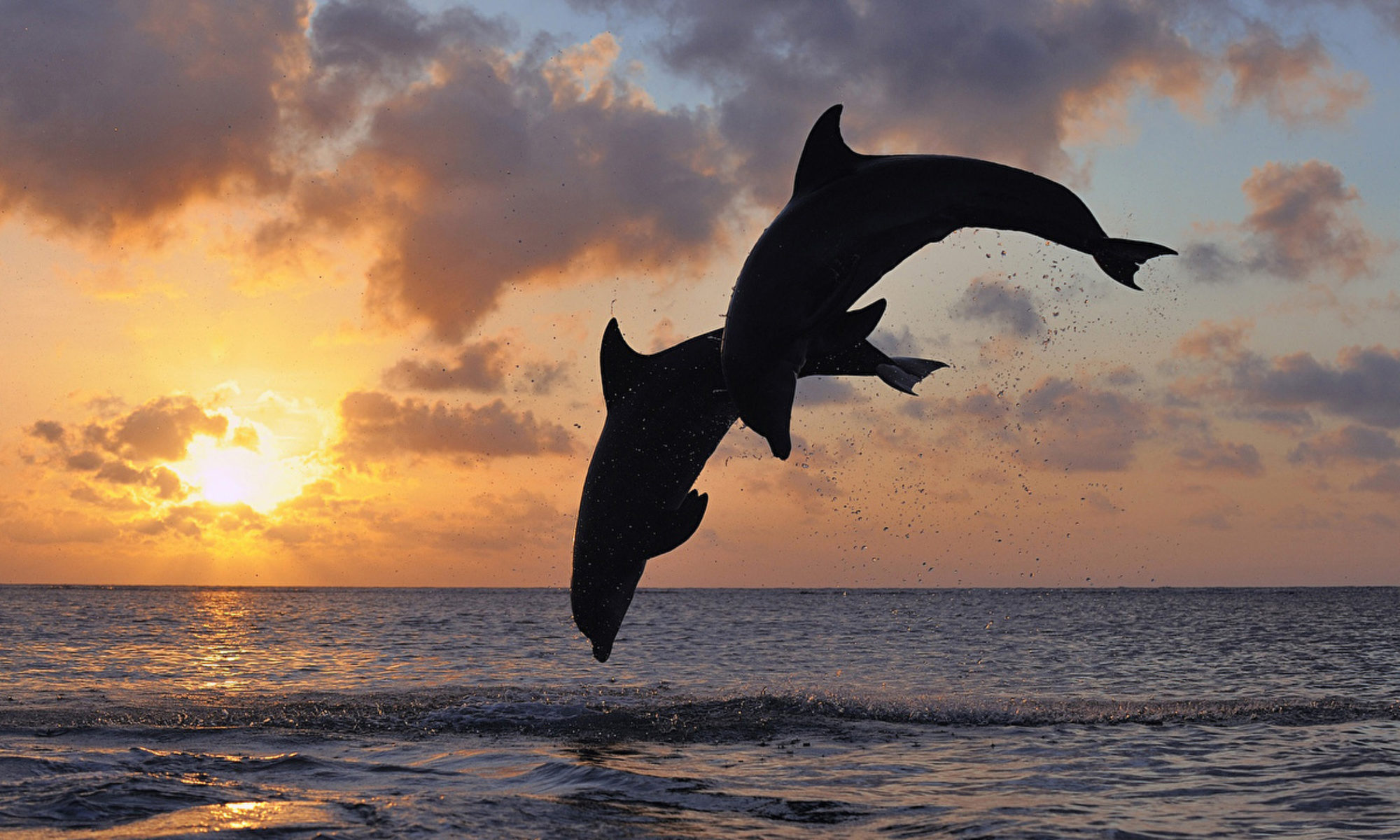 Abenteuer Delphin